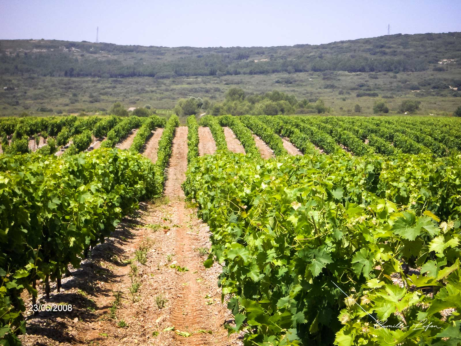 vin mireval muscat sud france rouge domaine rencontre